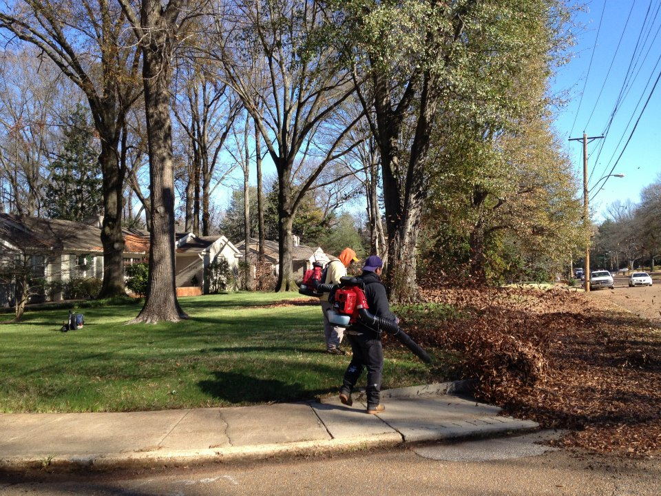 leaf removal-memphis-grazzmasters 11